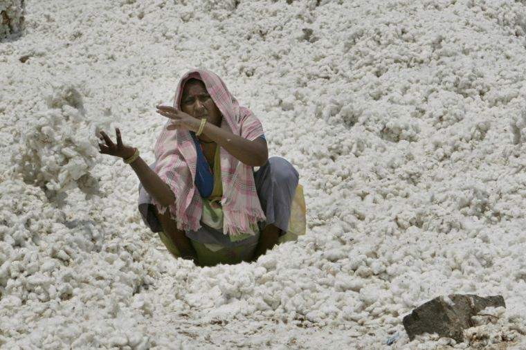 India cotton worker