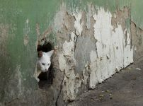 cat-in-the-hole-in-the-wall