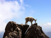 secure-footing-like-a-mountain-goats